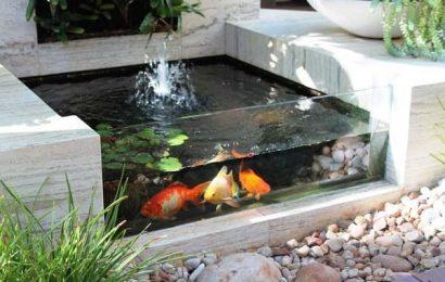 Nên đặt bể cá sao cho ngoại thất được bắt mắt