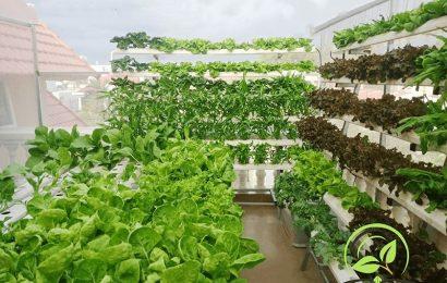 Tưởng trồng chơi ai ngờ đem lại kết quả không tưởng nhờ phương pháp trồng rau thuỷ canh ngay tại nhà.